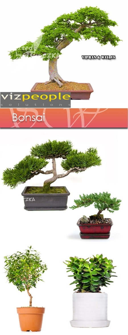 VizPeople - Bonsai