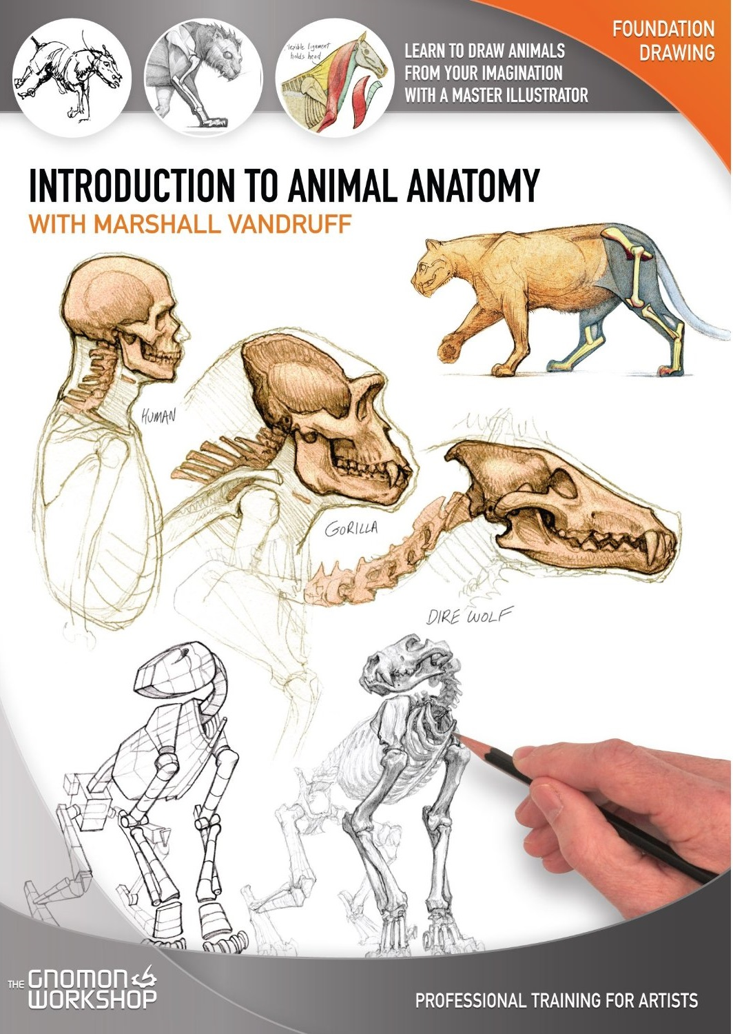 The GNOMON Workshop - Introduction to Animal Anatomy (Repost)