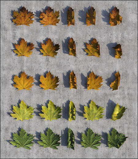 Autumn Leaves Pack 3D Studio Max 2012 (CG-Space)