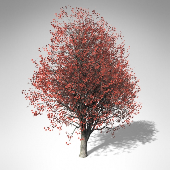 EA01a-red-maple_550x550