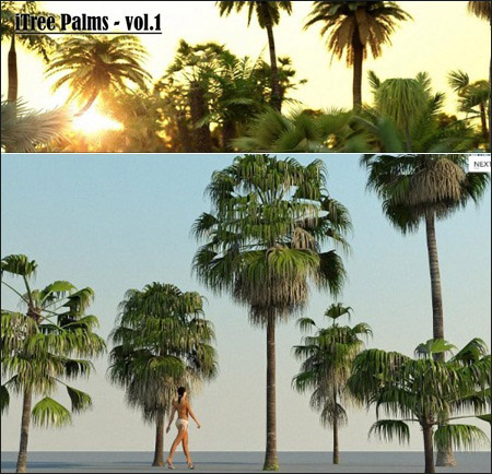 R&D Group – iTrees Palms vol.1