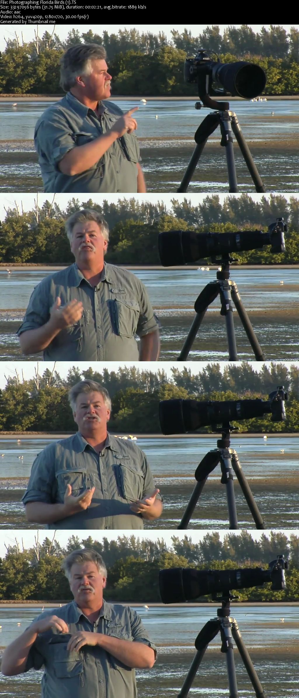 Photographing Florida Birds