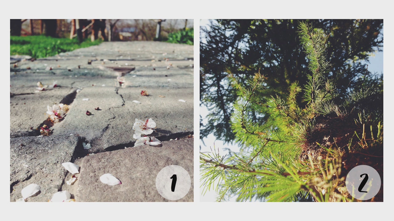 iPhone Photography: Make Your Pictures Stand Out (2016)