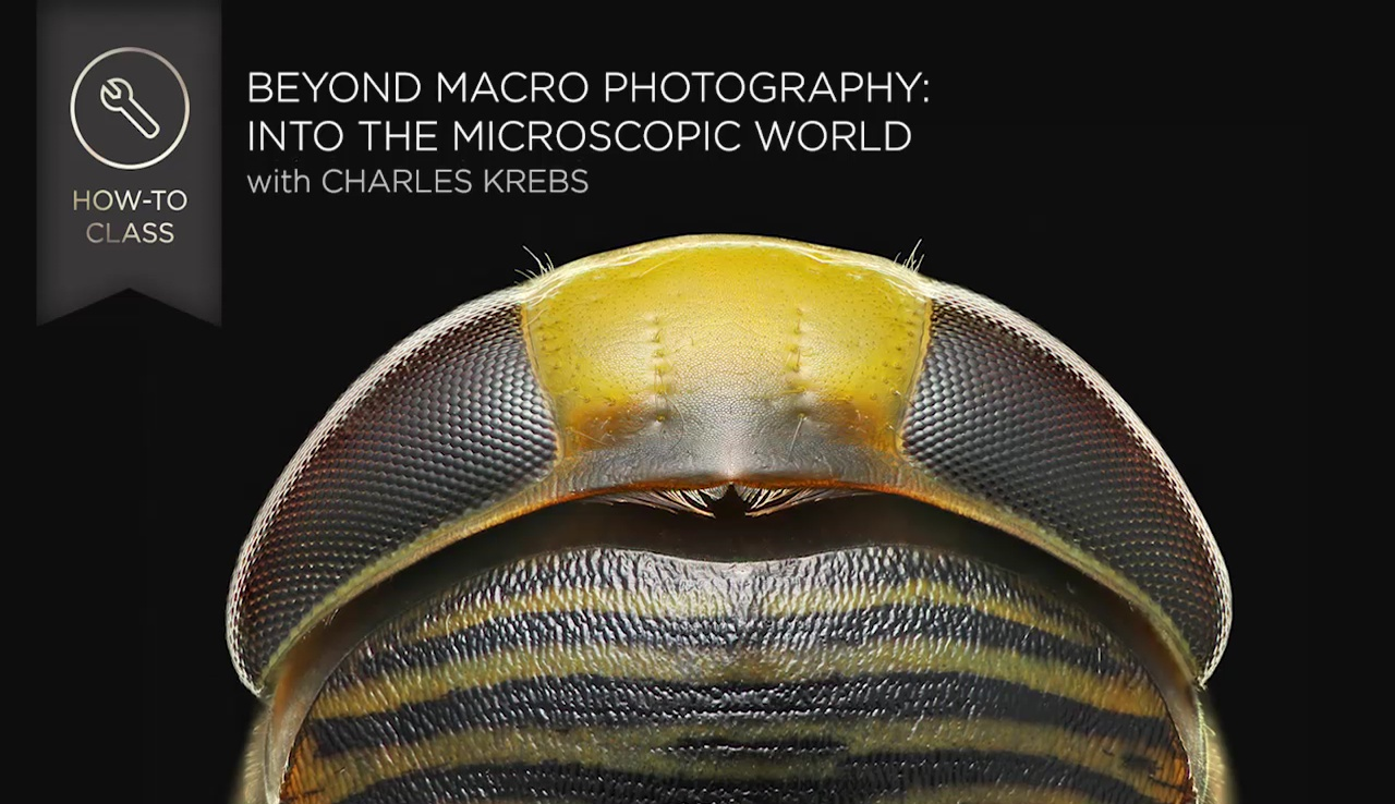 Beyond Macro Photography: Into the Microscopic World