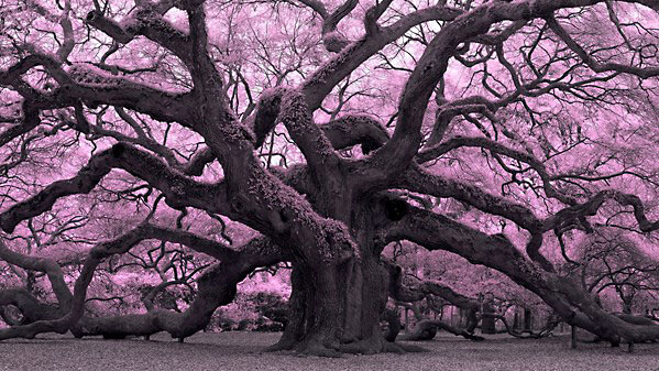 Lynda - Infrared Photography: Nature and Landscapes