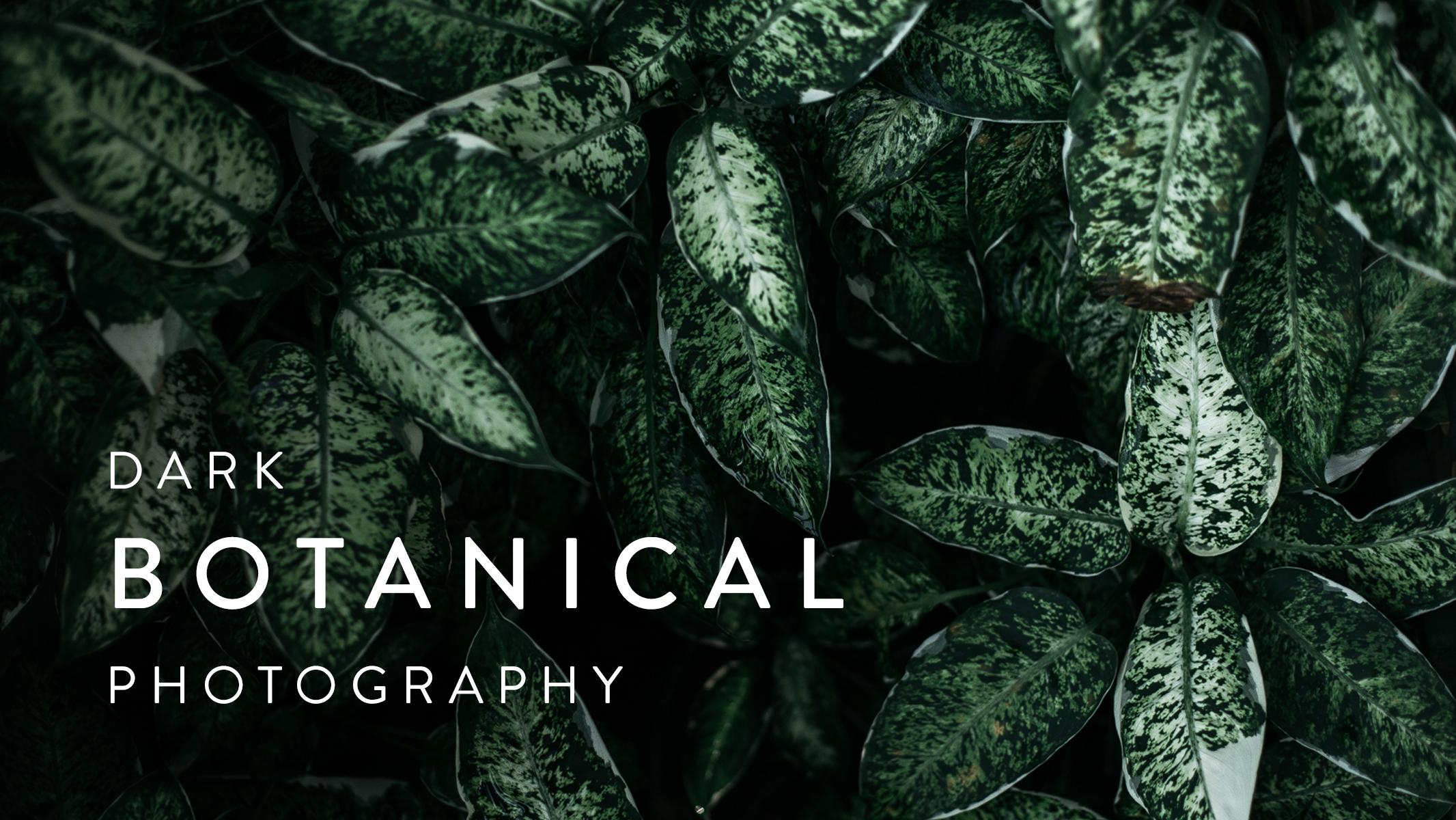 Dark Botanical Photography: Capture Beautifully Moody Images of Plants