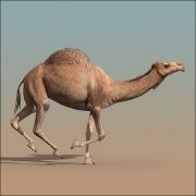 Turbosquid Camel (ANIMATED) by cgmobile